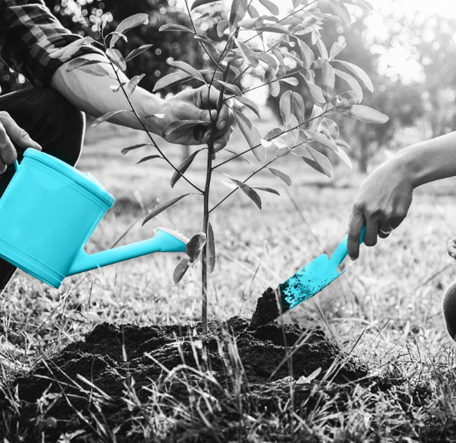 WP Creative, Design and Marketing Agency Suffolk, Sustainability, Planting a Tree